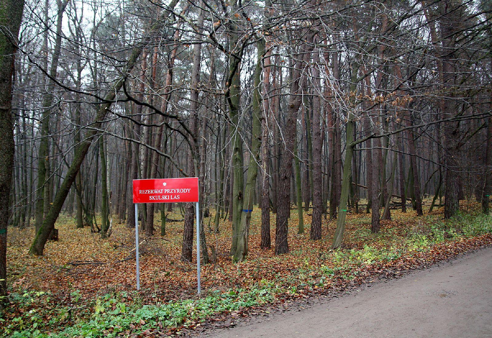 """Rezerwat """"Skulski Las"""" - Szlaki turystyczne Mazowsza"""